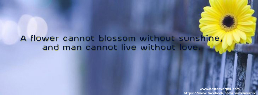 Flower Quote Cover Photo