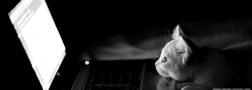 Cute-Cat-Facebook-Timeline-Covers