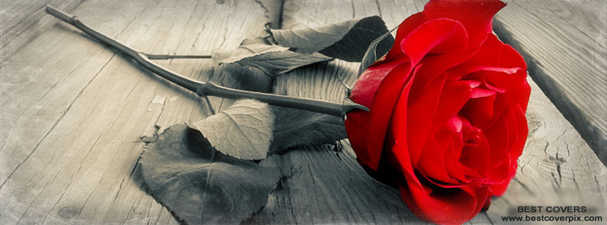 Beautiful Rose ! FB Timeline Cover