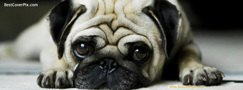 Sad and Cute Dog Best timeline Cover for Facebook