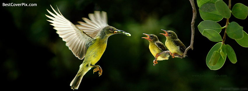 Bird Feeding Best Nature FB Cover photo