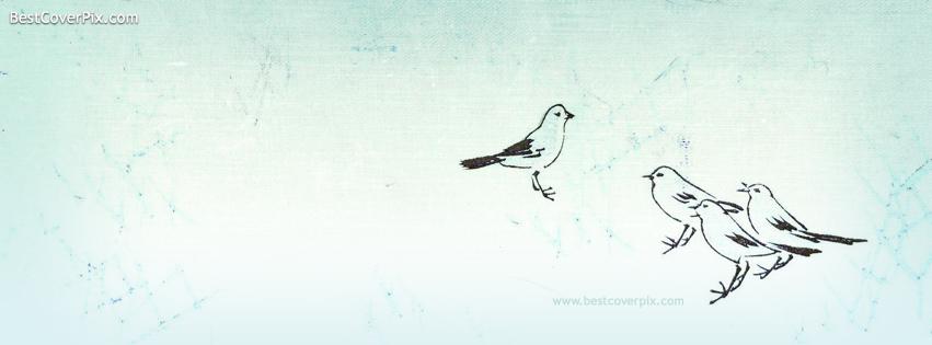 birds sketch cover photo