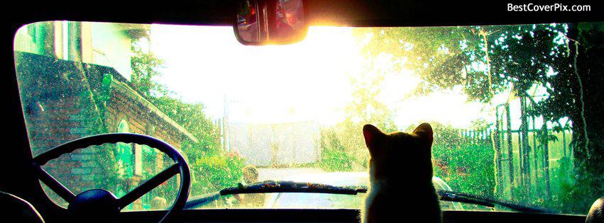 Cat Facebook Cover Photo