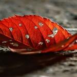 dry leaf fb cover