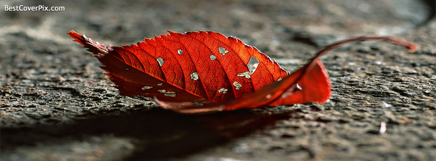 Beautiful Dry Leaf Facebook Cover Photo