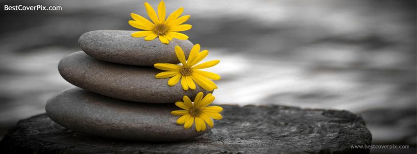 simple elegant nature cover photo
