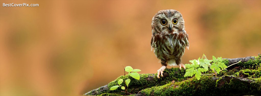 Cute Owl Facebook Nature Cover Photo
