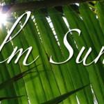 palm sunday fb cover photo