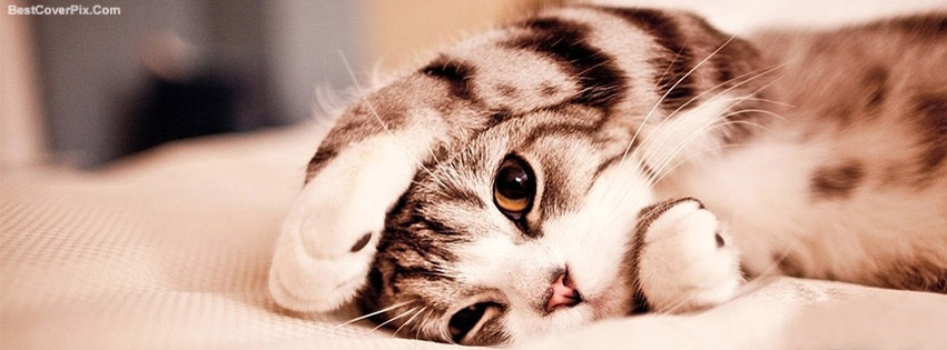 Cute Cats And Kittens Facebook Covers