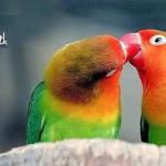 love birds quote fb cover