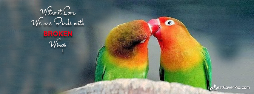love birds quote fb cover