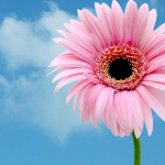 Happy Mothers day Facebook timeline cover