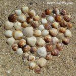 Seashell Heart Instagram pic