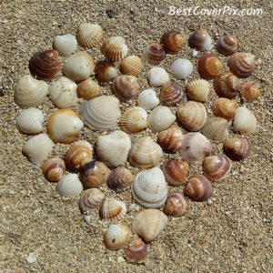 Seashell Heart Instagram pic